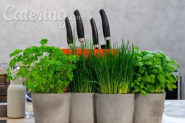 Plantas aromáticas para cultivar em casa